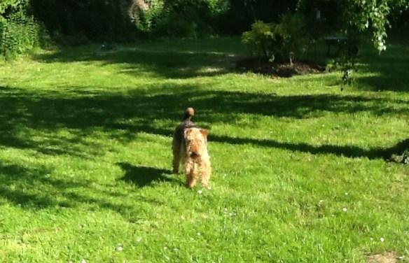 Dolly in the garden - Les Trauchandieres